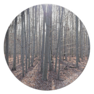 A beech forest in fall. plate