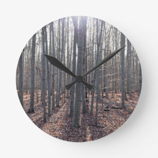 A beech forest in fall. round clock