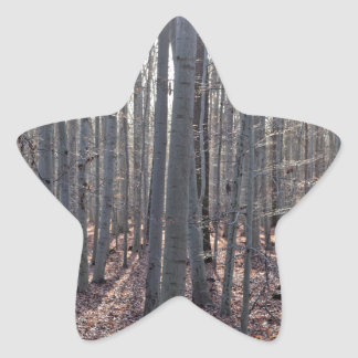 A beech forest in fall. star sticker