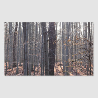 A beech forest in fall. sticker