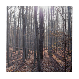 A beech forest in fall. tile