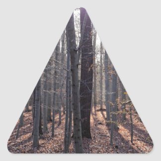 A beech forest in fall. triangle sticker