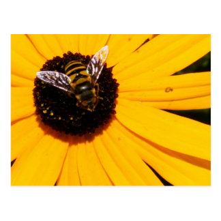 A Bee's Life Postcard