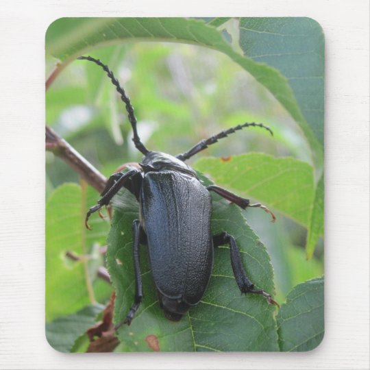 A Beetle's Journey Mouse Pad