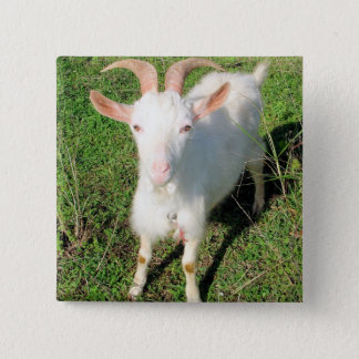A Big Kid 2 Inch Square Button