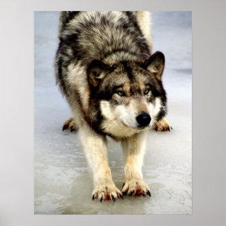 A Big Wolf Stretch Poster