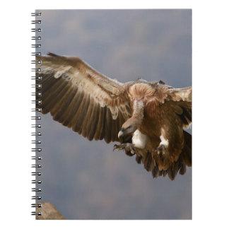 A Bird of Prey Notebook