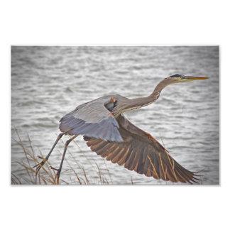 A bird set free photograph
