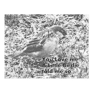 A birdie said you love me postcard