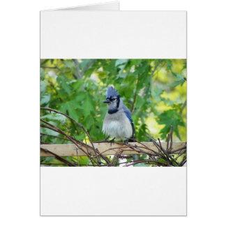 A birds eye day greeting card