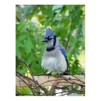 A birds eye day postcard