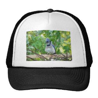 A birds eye day trucker hat