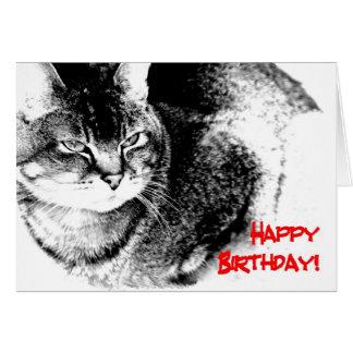 A Birthday Card - Half-Burmese Cat