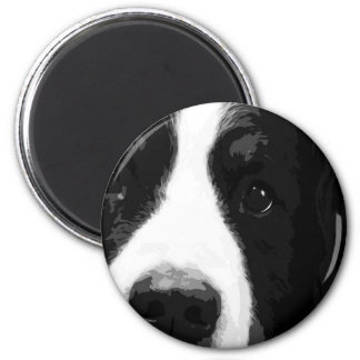 A black and white Bernese mountain dog Magnet