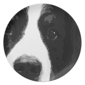 A black and white Bernese mountain dog Plate