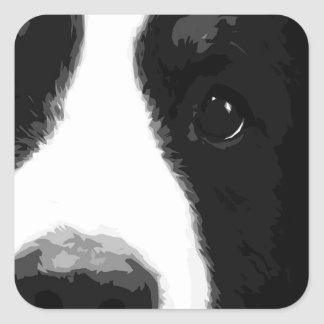 A black and white Bernese mountain dog Square Sticker