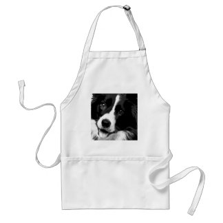 A black and white Border collie Standard Apron