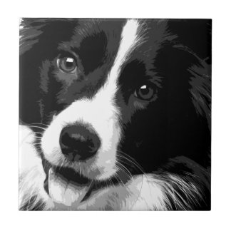 A black and white Border collie Tile