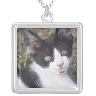 A black and white cat kitten in the garden. silver plated necklace
