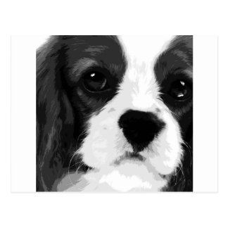 A black and white Cavalier king charles spaniel Postcard