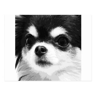 A black and white Chihuahua Postcard