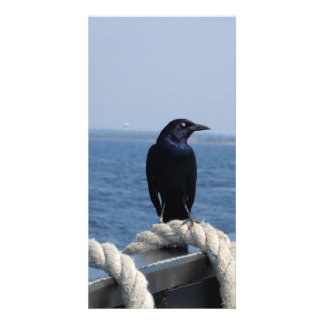 A Black Bird on the Ferry Photo Card Template