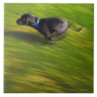 A black dog running ceramic tile