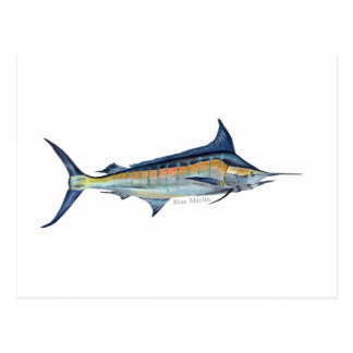 A Blue Marlin fish postcard
