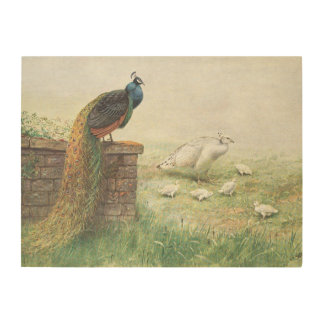 A Blue Peacock and white peahen with chicks Wood Prints