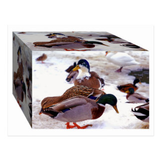 A Box of Quackers Postcard