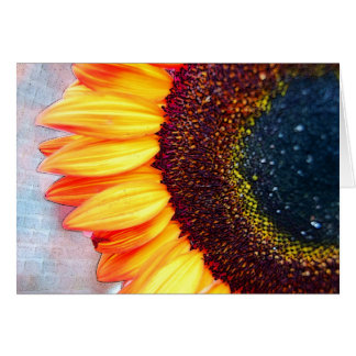 A Brilliant Orange Sunflower Card