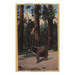 A Brown Bear in the Woods Poster