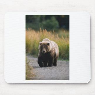 A Brown Bear Walking on a Trail Mousepads