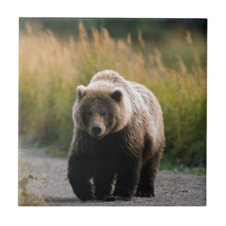 A Brown Bear Walking on a Trail Tile