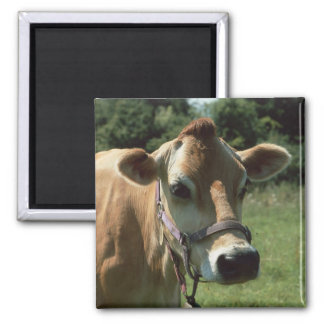A Brown Jersey Cow In Summer Meadow Fridge Magnet