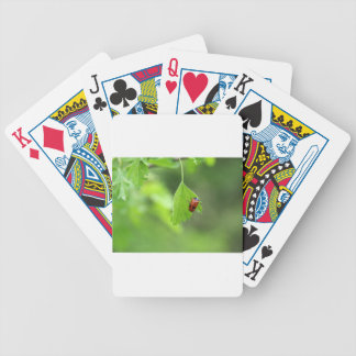 A Bug's Life.JPG Poker Deck