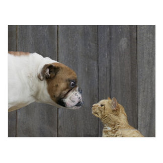 A Bulldog and a cat are face-to-face in a stand Postcard