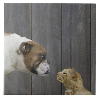 A Bulldog and a cat are face-to-face in a stand Tile