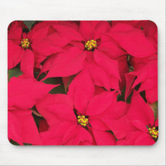 A bunch of Brightly Colored Christmas Poinsettias Mouse Pad