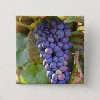 A bunch of Pinot Noir grapes in a Chambertin 2 Inch Square Button
