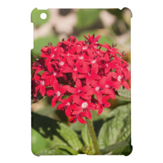 A bunch of small red flowers iPad mini cover