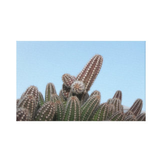 A cactus in our garden canvas print