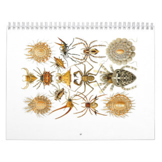 A calendar of spiders by Ernst Haeckel.