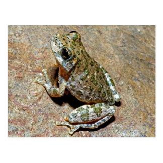 A Canyon Treefrog Postcard