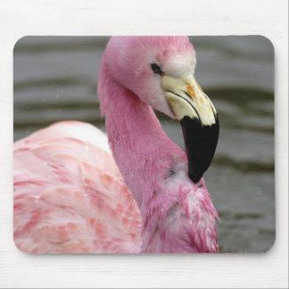 A captive photo of a Andean Flamingo Mouse Pad