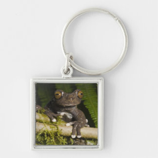A captive Tapichalaca Tree Frog (Hyloscirtus Silver-Colored Square Keychain