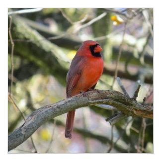 A Cardinal Christmas Card