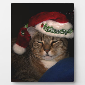A Cat Dressed for Christmas Plaque