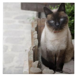 A Cat Tile