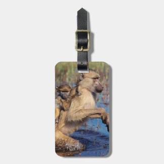 A Chacma Baboon carrying young through a river Luggage Tag